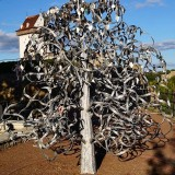 Narva: Tree of love